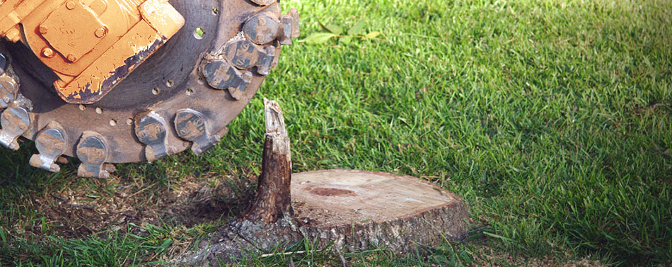 Over twenty-five years of experienced tree care service.