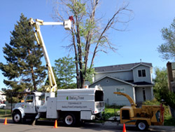 Home Tree Service
