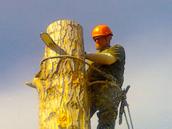 Tree Service in Denver